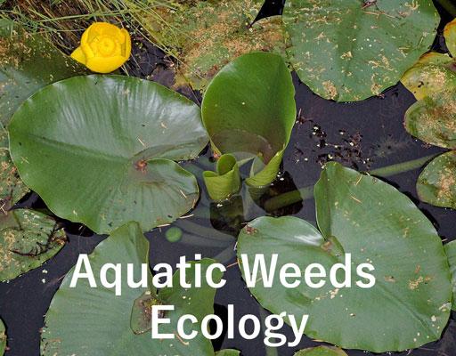 Aquatic Weeds Ecology