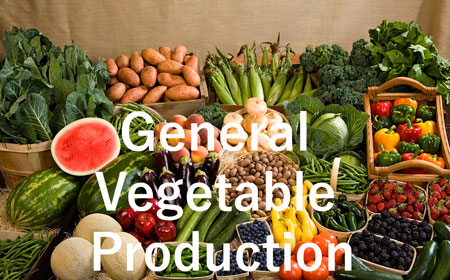 General  Vegetable Production